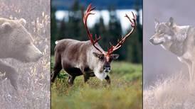 In defense of Alaska's acting wildlife chief