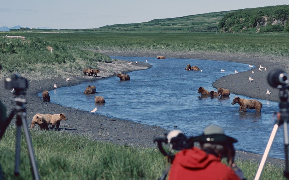 Bears and humans congregate annually at McNeil River State Game Sanctuary across Cook Inlet from Homer. (Photo by Larry Aumiller)
