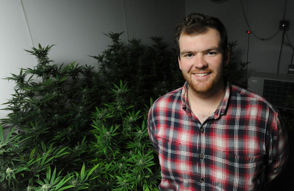 Jake Warden of Cannabaska with Blue Dream cannabis sativa plants in one of their bloom rooms on Wednesday, June 19, 2019. (Bill Roth / ADN)