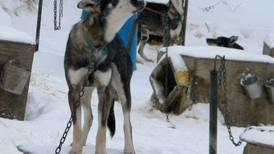 Team returns to tell story of 2013 Yukon Quest