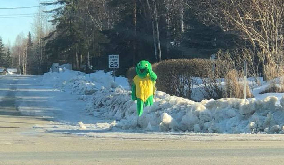 "Meredith Lewis snapped a photo of Jack Cato in a turtle costume around 9:45 a.m. Thursday at Lee Street and Eagle River Road. ""Turtle man had quite the pep in his step and was just strolling down the sidewalk. It put a smile on the faces of the drivers stuck in traffic for sure!"""