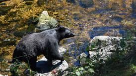Close encounters of the ursine kind near Wrangell