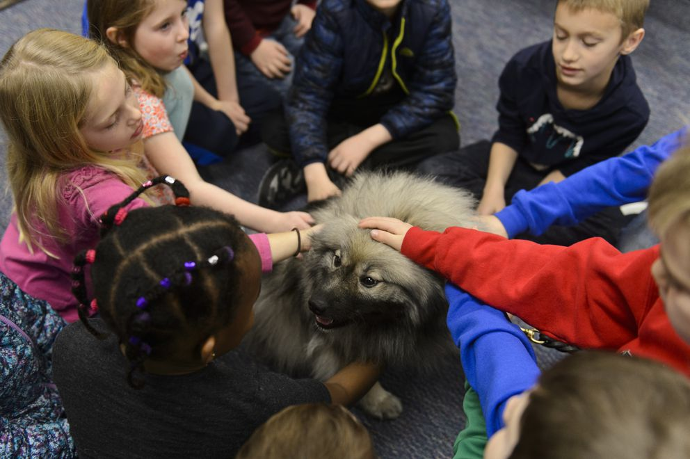 Callie, a Keeshond, visits students at Bear Valley Elementary School. Two dogs and handlers from the Alaska chapter of National Crisis Response Canines visited students and staff of Bear Valley Elementary School on Monday. Principal Carissa Cote said she hoped it would help students feel safe upon returning to school after the Nov. 30 earthquake. (Marc Lester / ADN)