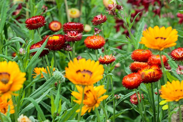 Marya Morrow Aug. 25, 2015 has been a competitive flower grower for the Alaska State Fair since the early 1980s.