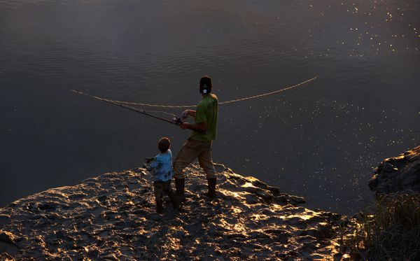 TheSnow's fish forsilvers in the evening light. (Bob Hallinen / ADN)