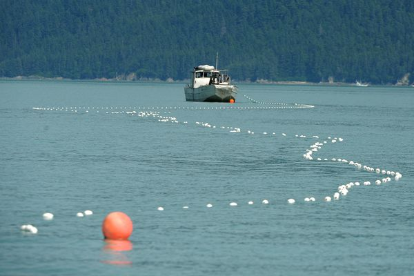 A gillnet boat fishes for chum salmon during a 3 day opening at Taku Inlet Near Juneau, AK on Tuesday, July 24, 2018. About 400 boats participated in the mostly hatchery reared fishery. Along with the chums some sockeye were harvested. (Bob Hallinen / ADN)