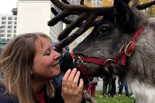 Denise Hardy of the Reindeer Farm in the Butte visits with Star the Reindeer during a 2019 Fur Rondy pin announcement in Anchorage on Monday, Oct. 1, 2018. (Bill Roth / ADN)