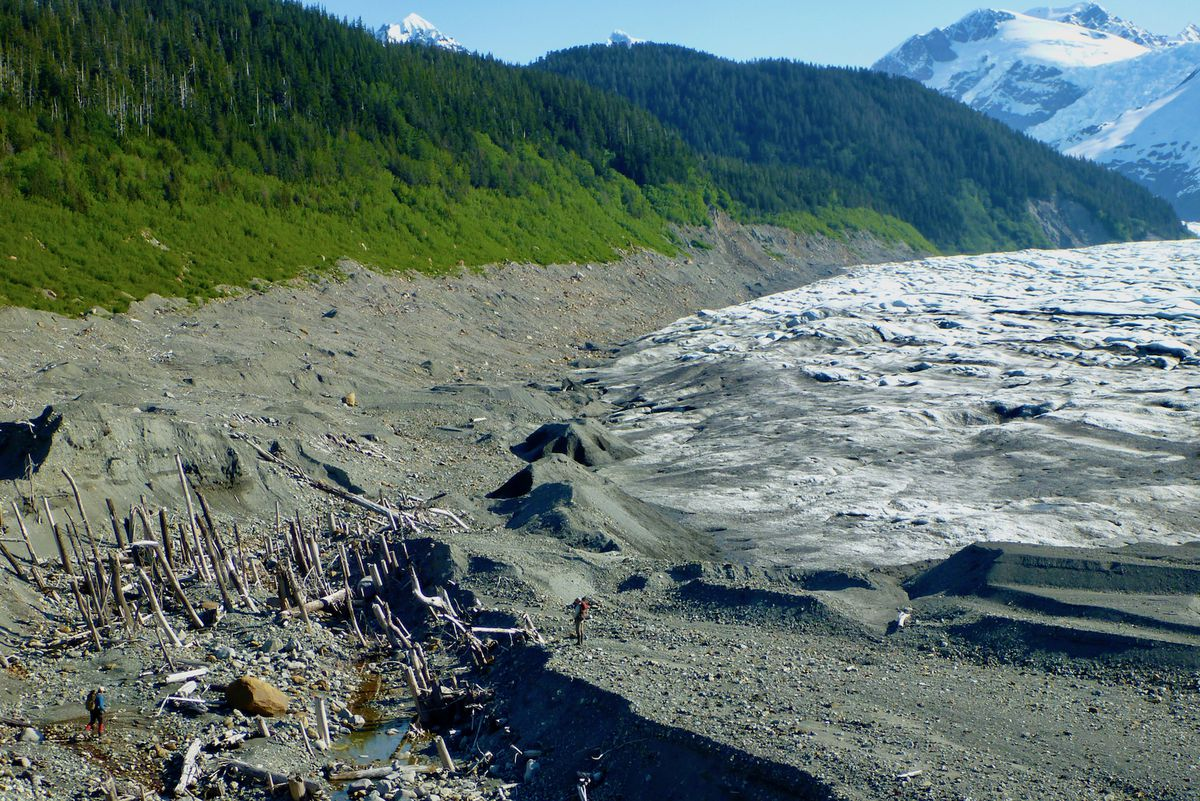 """A """"ghost forest"""" exposed as La Perouse Glacier in Southeast Alaska retreated. In the past, the glacier ran over the rainforest trees. (Photo by Ben Gaglioti)"""