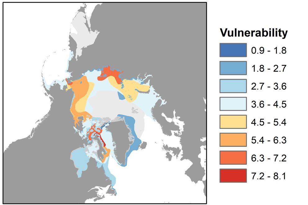 This map shows the September ranges of all Arctic marine mammal species. Red represents areas where mammal populations are highly vulnerable to ship traffic, while blue indicates areas of low vulnerability. Mammal ranges that don't overlap with sea routes are shown in light gray. (Image courtesy of Donna Hauser/ UAF)
