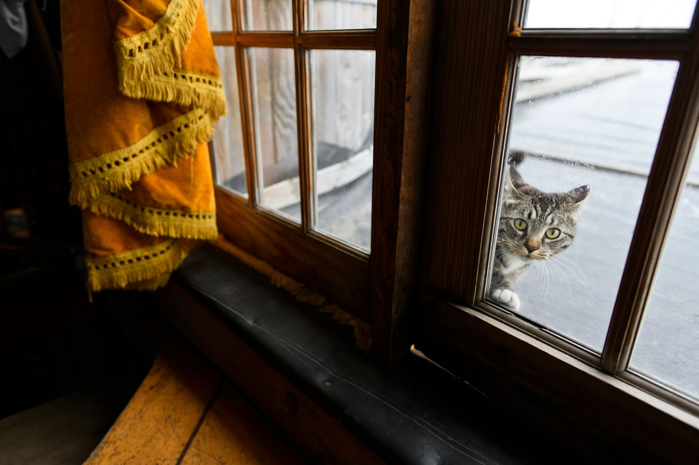 A family pet peeks into a window on the old boat where Drew O'Neill lives with his family. (Marc Lester / ADN)