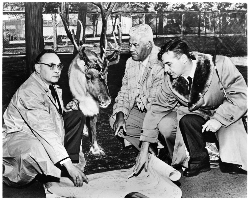 'Operation Reindeer gets underway as motor carrier executives and animal experts set plans. Edwin L. Isenberger (left), Operations Engineer for Consolidated Freightways Inc., discusses novel move with Smithsonian National Zoological Park's Senior Keeper Charles Thomas and Assocaite Director J. Lear Grimmer. This image was taken at the Seattle Zoo where the handlers stopped to visit with 'Pepper Pot ' at the reindeer exhibition to set plans for the trip. Operation Reindeer was the name for the transfer of 14 reindeer and 1 caribou to the National Zoological Park from Alaska in 1958. (Smithsonian Institution Archives, Record Unit 365, Box 15, Folder: 11)