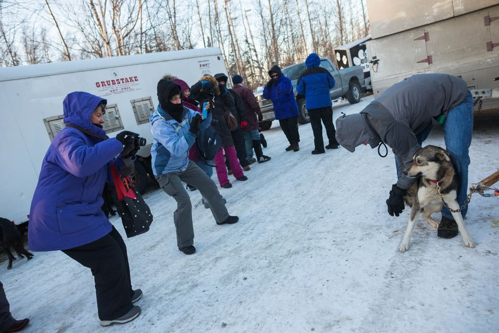 Tourists photograph a veterinarian examining a dog in Justin Stielstra's team at the Iditarod vet checks in Wasilla on Wednesday. (Loren Holmes / Alaska Dispatch News)