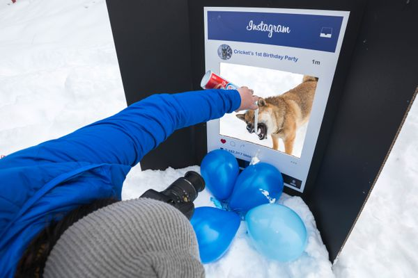 Gabrielle Poon takes a picture of her dog Cricket during Cricket's first birthday party Saturday, Feb. 24, 2018 at Kincaid Park. Cricket might be Alaska's most famous dog on Instagram, with over 47,000 people following his account @cricketinthethicket. (Loren Holmes / ADN)