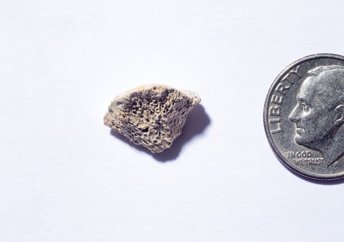 This bone fragment, found in Southeast Alaska, belongs to a dog that lived about 10,150 years ago, a study concludes. Scientists say the remains, a piece of a femur, provide insight into the question of when dogs and humans first entered the Americas, and what route they took to get there. (Douglas Levere / University at Buffalo via TNS)