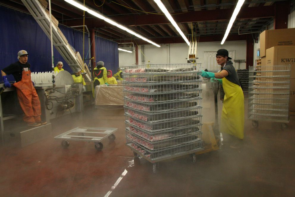 Benny Takumjenak of Russian Mission pushes racks of frozen whole salmon on June 18 from the freezer to the packing area of the Kwikpak Fisheries plant in Emmonak. (Lisa Demer / Alaska Dispatch News)