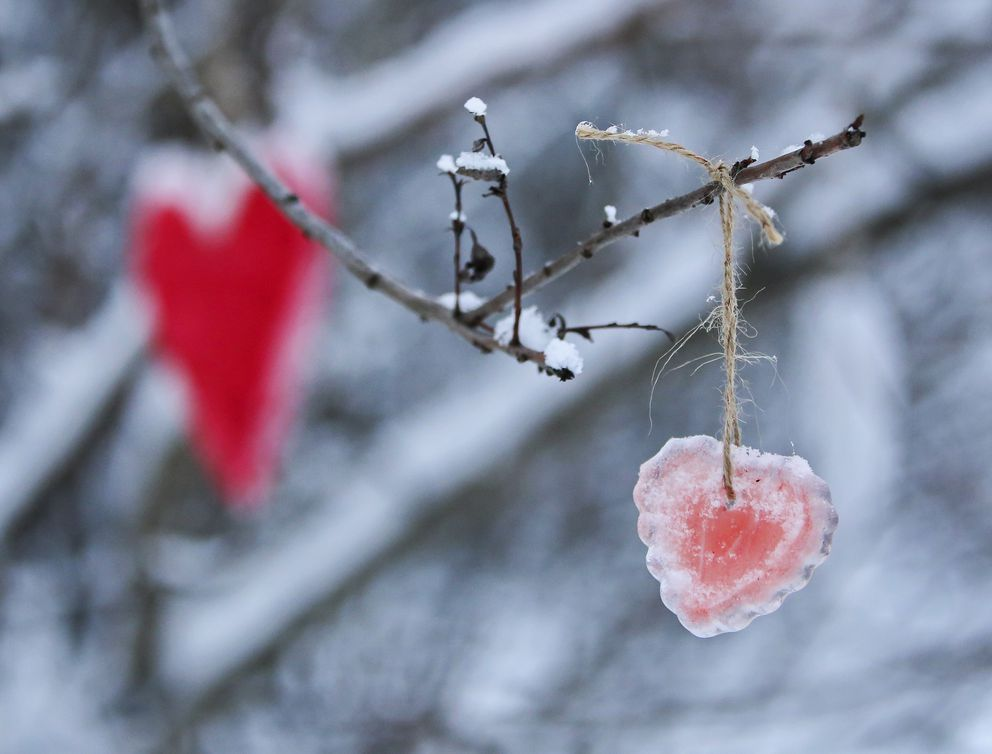 Hearts made of ice hang from a tree. (Emily Mesner / ADN)