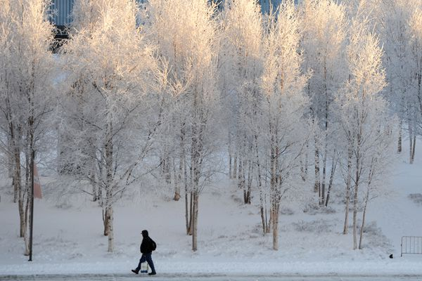 A pedestrian walks past frost-covered trees along C Street near the Anchorage Museum during the cold weather on Sunday, Jan. 5, 2020. (Bill Roth / ADN)