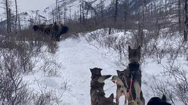 Iditarod teams had to hoof it past bison, horses and moose this year
