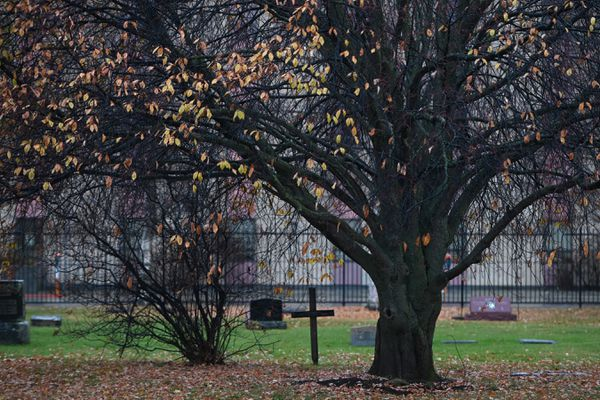 Leaves cling to a tree in the Anchorage Memorial Park Cemetery on Sunday, Oct. 25, 2020.