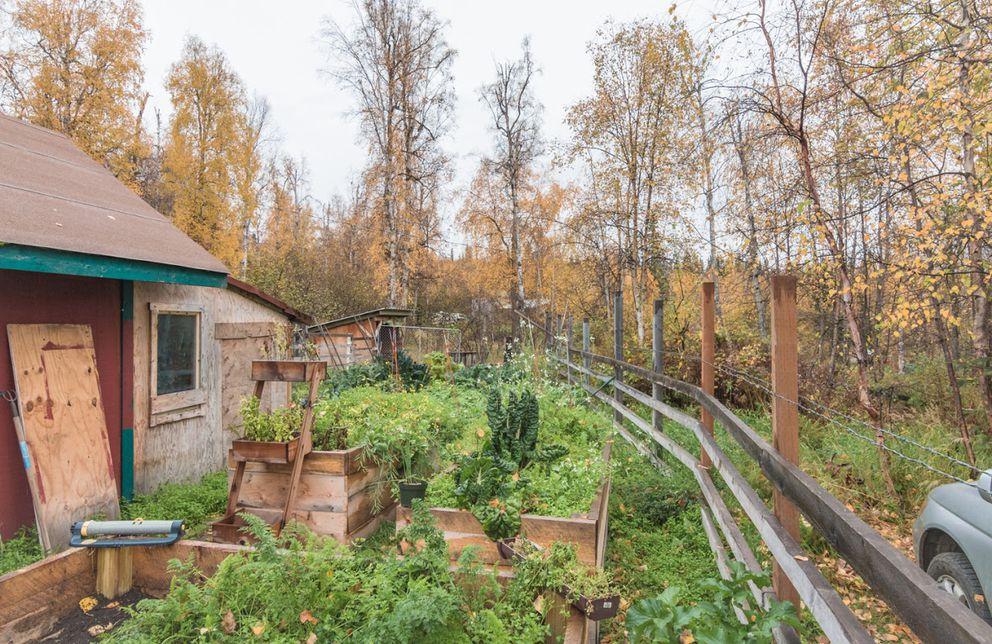 The Top of the Hill Farm garden near Fairbanks. (Doug Lange)