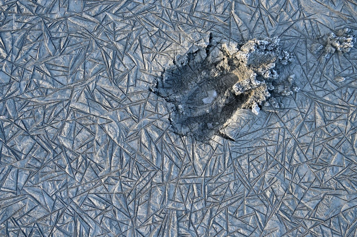 A moose print is frozen in the mud along Wasilla Creek in the Palmer Hay Flats State Game Refuge. (Marc Lester / ADN)
