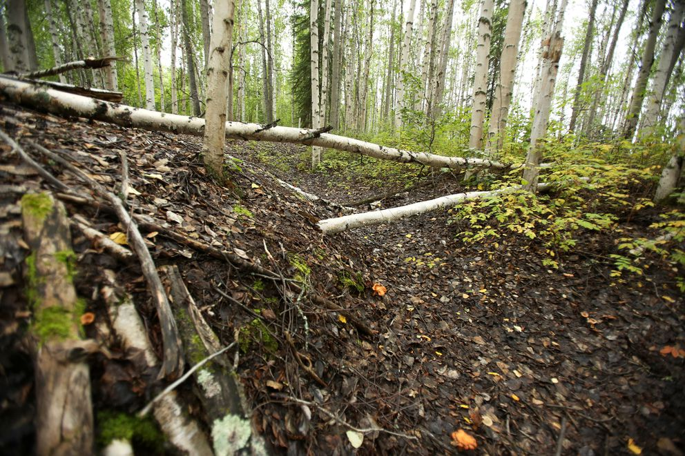 Sunken areas of land on Wednesday Aug. 19, 2015 behind the University of Alaska Fairbanks indicate the thawing permafrost in Fairbanks, according to a professor of geophysics at UAF. (Shelby Lum / Alaska Dispatch News)