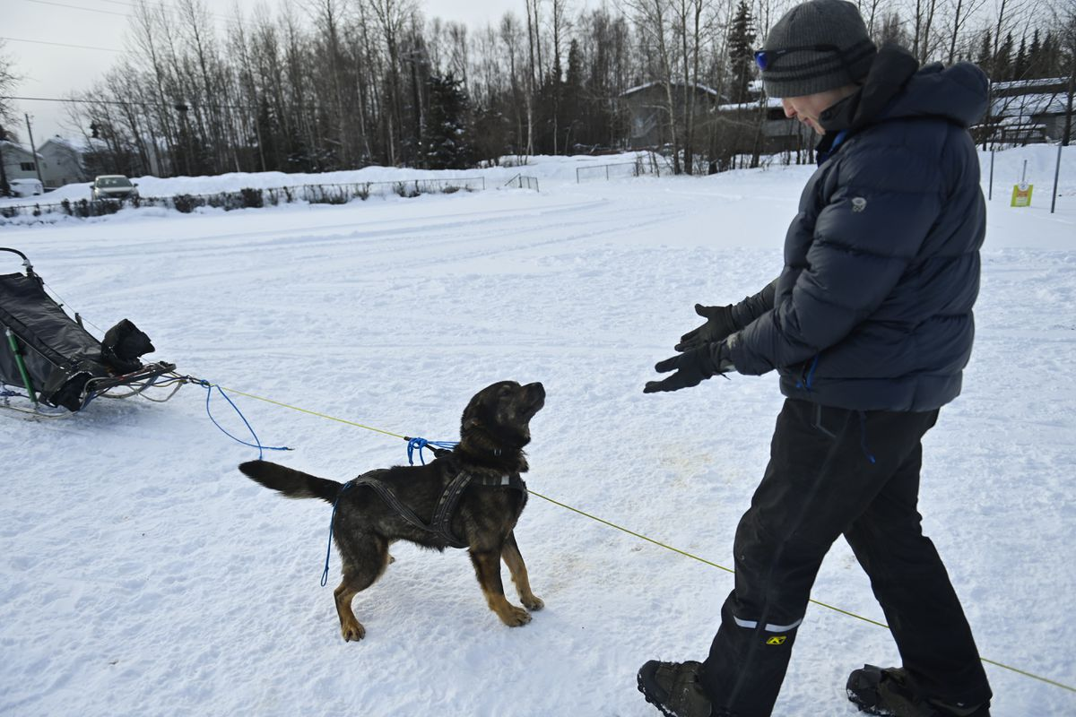 Iditarod rookie Chad Stoddard of Fairbanks greets a team member after a short run at Tozier Track on Friday. Stoddard's team is a blend of Iditarod dogs from Sven Haltmann and Yukon Quest dogs from Torsten Kohnert.