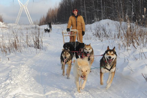 Iditarod veteran musher Jeremy Keller leads his 14-year-old son Bjorn Keller down a trail during a training run in Knik on Tuesday, Feb. 12, 2019. (Bill Roth / ADN)