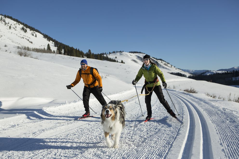 A couple and there dog skijoring in the western United States.