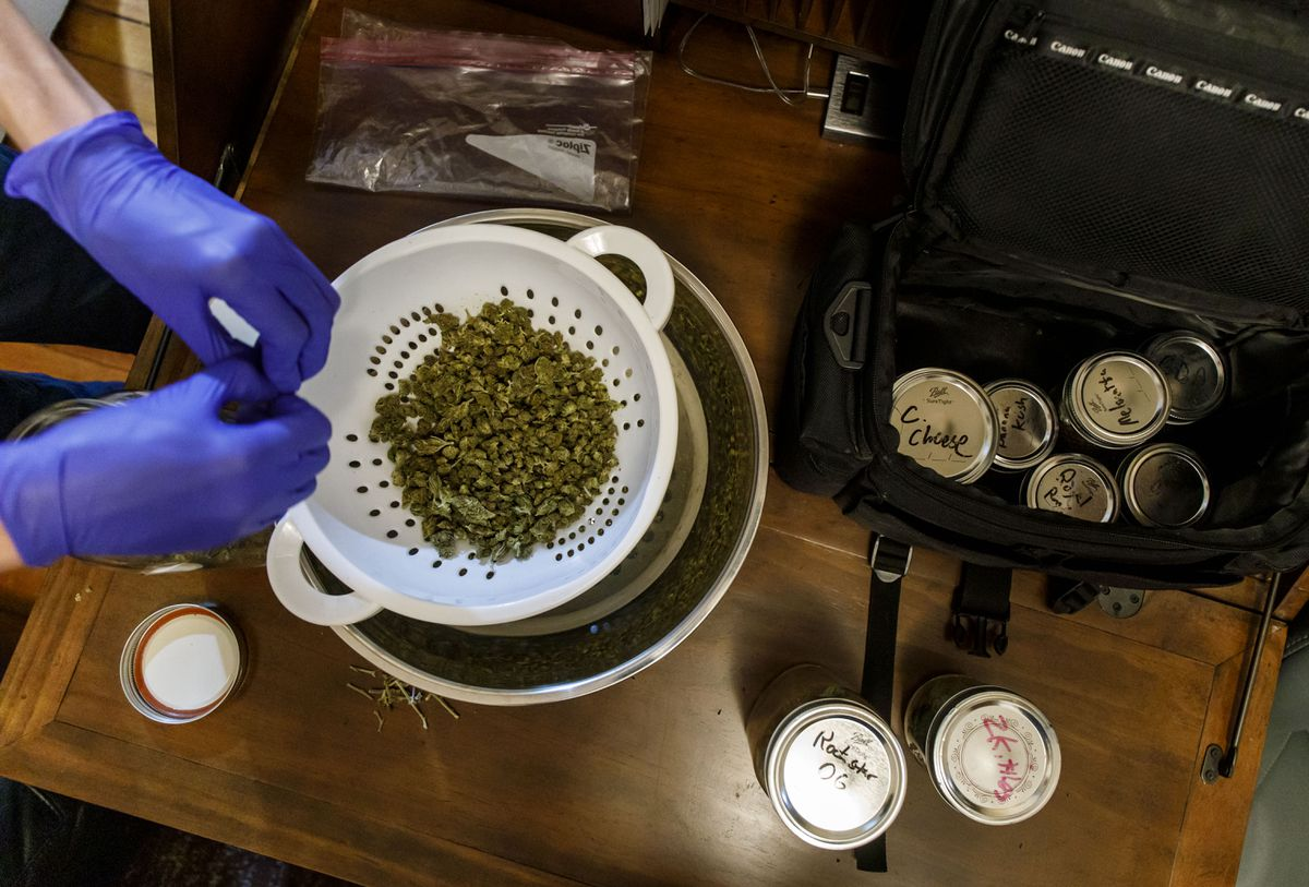 The dealer prepares cannabis for customer orders Wednesday, July 31, 2019. (Brian Cassella/Chicago Tribune/TNS)