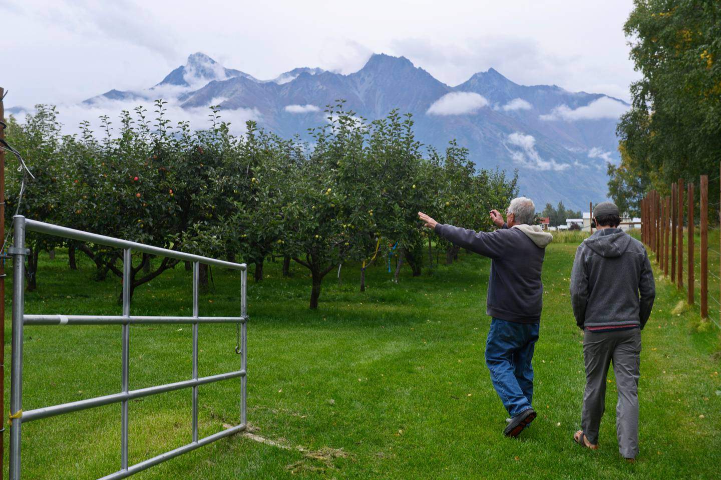 Fall harvest is the fruit of a Palmer apple growers curiosity