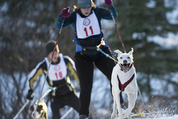 Allison McCarrey leads Wyatt Barrett up a hill. The Anchorage Skijor Club hosted a 5-kilometer race on the Hillside Ski Trails on Tuesday evening, March 20, 2018. (Marc Lester / ADN)