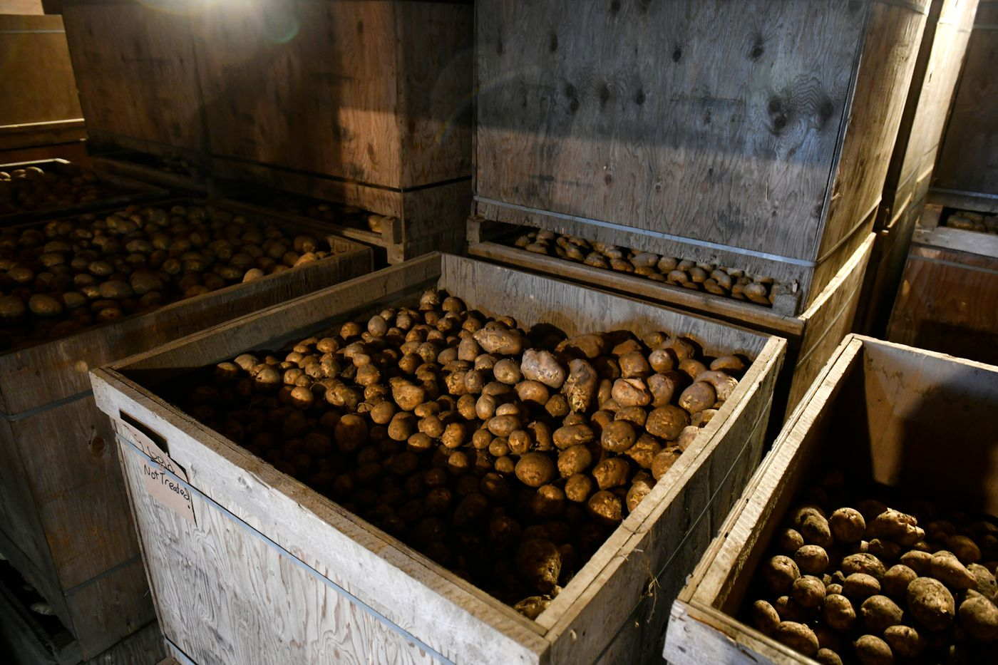 This year's white, Yukon gold and red potatoes are in storage at Three Ladybugs Farm in Palmer. (Marc Lester / ADN)