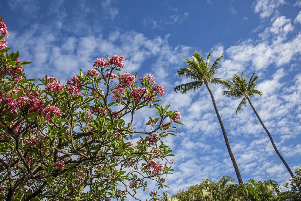 Beautiful foliage in Maui. (Photo for The Washington Post by Ryan Siphers)