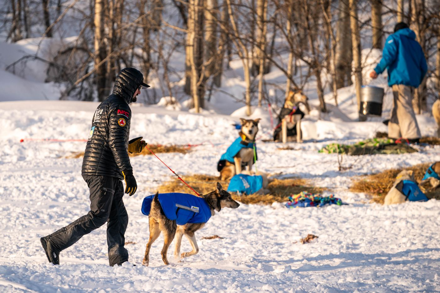 Peter Kaiser walks one of his dogs in Takotna on Wednesday, March 11, 2020 during the Iditarod Trail Sled Dog Race. (Loren Holmes / ADN)