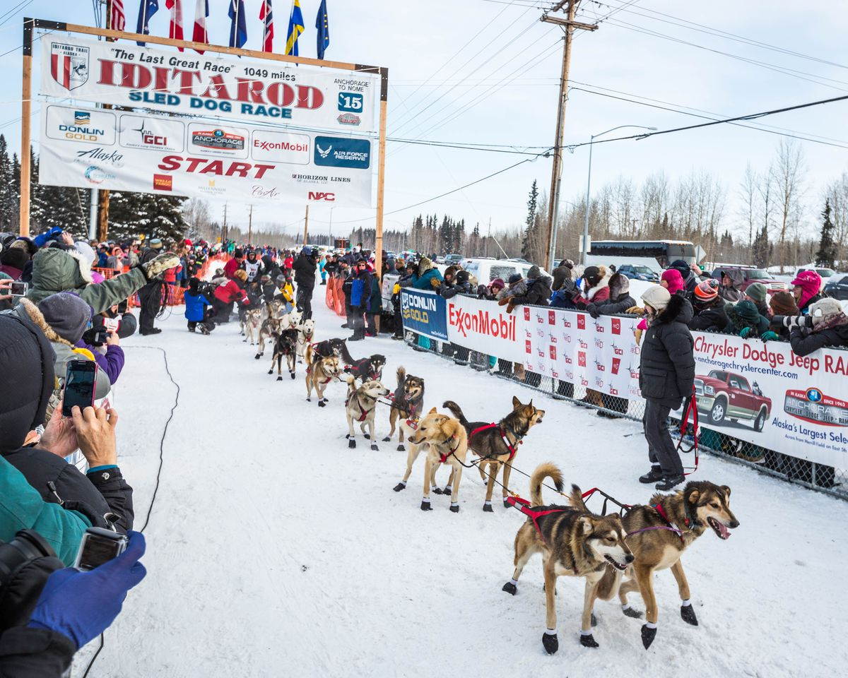 Image result for iditarod