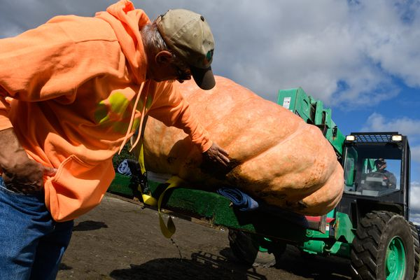 Dale Marshall touches his biggest pumpkin as it's lifted from on a pallet into the competition arena at the Alaska State Fair. (Marc Lester / ADN)