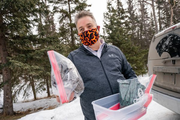 Wayne Jones prepares to deliver raw materials for volunteers to sew face masks for nurses, on Friday, March 27, 2020 in south Anchorage. The masks are washable and have a removable, replaceable inner layer. Jones says he has over 50 volunteers helping to make the masks and he's delivered more than a thousand to nurses at all of Anchorage's major hospitals. (Loren Holmes / ADN)