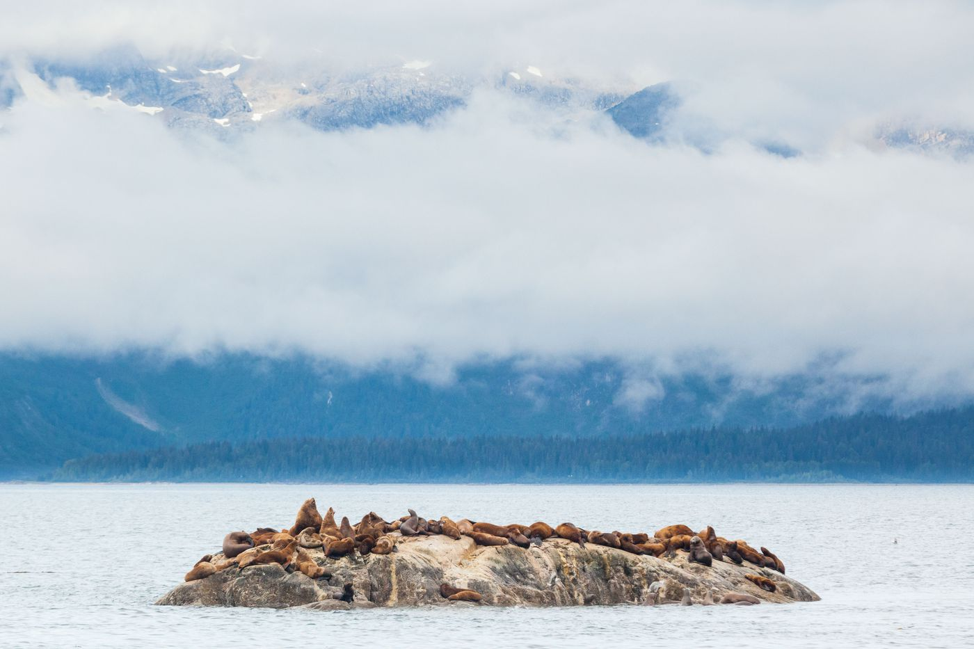 Sea lions rest on a rock in Glacier Bay National Park, Aug. 24, 2011. (Loren Holmes / Alaska Dispatch News)