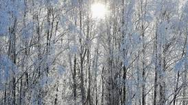 Up to 8 inches of snow possible Thursday in Southcentral Alaska, meteorologists say