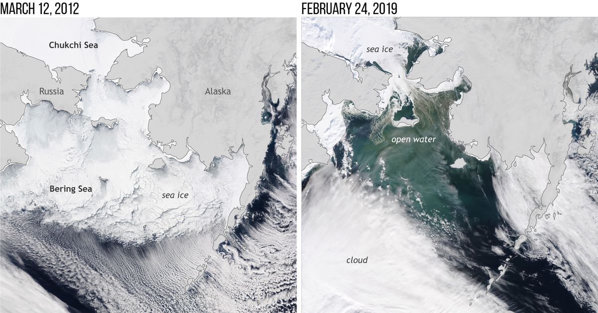 This NOAA satellite image of the Bering Sea in March 2012 shows extensive sea ice coverage, which was not the case near the maximum ice time this February. (Courtesy NOAA)