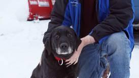 Blind dog rescued after being lost for 2 weeks in Interior Alaska cold