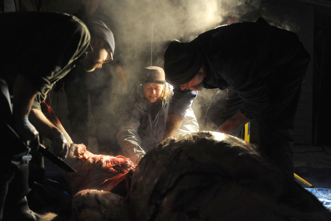Steam rises from the body of a moose, as Cameron Hubbard, Sharon Skidmore and Mark Wedekind work to field dress the animal. The road-killed moose was delivered by Don Dyer, of the Moose Federation, Dec. 14, 2015 after it was killed on the Anchorage hillside.