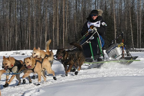 Chad Stoddard drives his sled around a corner on the Susitna River during the start of the Iditarod Trail Sled Dog Race on Sunday, March 7, 2021. (Bill Roth / ADN)