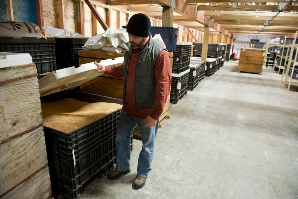 Rob Carter, program manager for the Plant Materials Center, shows a one-ton bin of wheatgrass seed in the center's storage area. The state's Plant Materials Center supports Alaska's agricultural industry, in part, by selling seeds and offering a seed cleaning service. Photographed on February 14, 2017. (Marc Lester / Alaska Dispatch News)