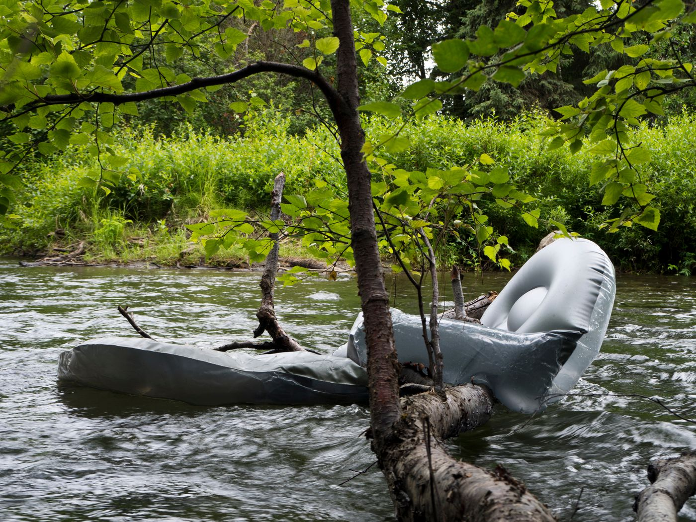 An inflatable float is caught and left in tree branches on Campbell Creek just south of Dowling Road on July 10. (Marc Lester / ADN)