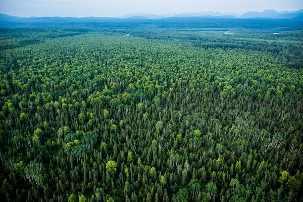 In a 2012 file photo, Alaska's boreal forest, also known as taiga, stretches to the horizon. (Loren Holmes / ADN file photo)
