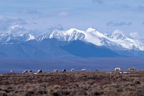 The coastal plain of the Arctic National Wildlife Refuge, with the Brooks Range as a backdrop. (U.S. Fish & Wildlife Service photo)