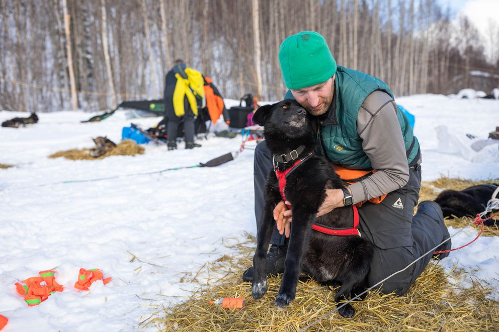Kelly Maixner massages one of his dogs at the Takotna checkpoint on Wednesday. (Loren Holmes / ADN)