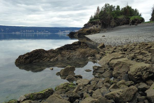 Mussels and clams are now scarce on a shore near Bear Cove in Kachemak Bay on Sunday, July 9, 2017. (Charles Wohlforth / Alaska Dispatch News)
